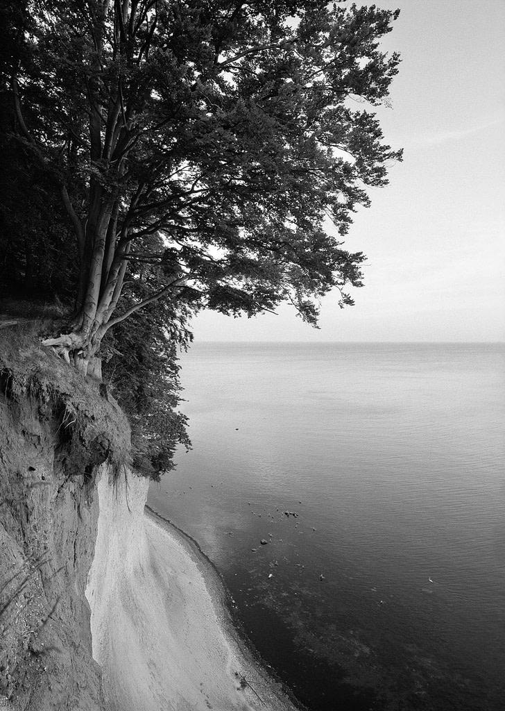 """Waldfoto """"Jasmund II"""" von der Ostseeküste im Jasmund Nationalpark auf der Insel Rügen in Mecklenburg Vorpommern als Fotokunst in limited Edition von Whitewall bei der Galerie Lumas vom Fotograf Ralph von Kaufmann aus Hamburg"""