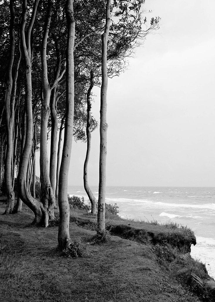 """Waldfoto """"Kleiner Wohld"""" von der Ostseeküste in Heiligendamm in Mecklenburg Vorpommern als Fotokunst in limited Edition von Whitewall bei der Galerie Lumas vom Fotograf Ralph von Kaufmann aus Hamburg"""