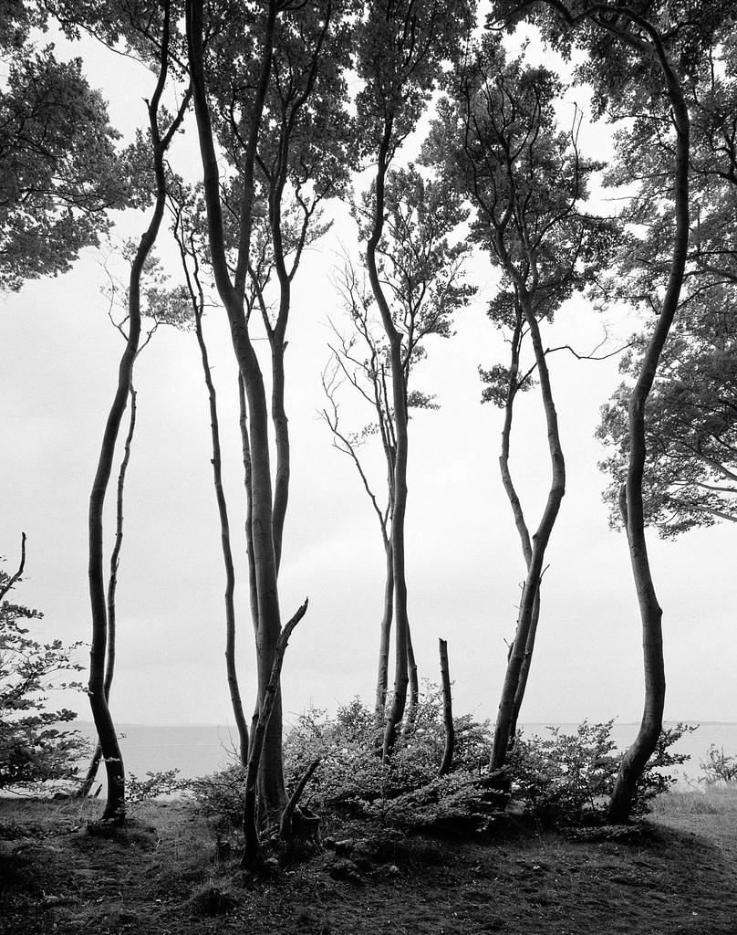 """Waldfoto """"Gnewer Ufer"""" vom großen Jasmunder Bodden auf der Insel Rügen in Mecklenburg Vorpommern als Fotokunst in limited Edition von Whitewall bei der Galerie Lumas vom Fotograf Ralph von Kaufmann aus Hamburg"""