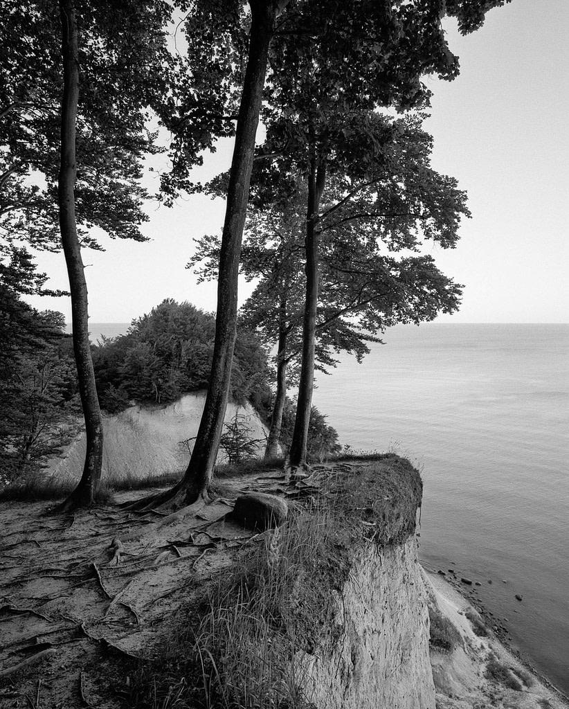 """Waldfoto """"Jasmund I"""" von der Ostseeküste im Jasmund Nationalpark auf der Insel Rügen in Mecklenburg Vorpommern als Fotokunst in limited Edition von Whitewall bei der Galerie Lumas vom Fotograf Ralph von Kaufmann aus Hamburg"""