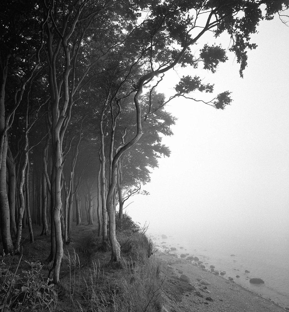 """Waldfoto """"Wittow III"""" von der Ostseeküste im Jasmund Nationalpark auf der Insel Rügen in Mecklenburg Vorpommern als Fotokunst in limited Edition von Whitewall bei der Galerie Lumas vom Fotograf Ralph von Kaufmann aus Hamburg"""
